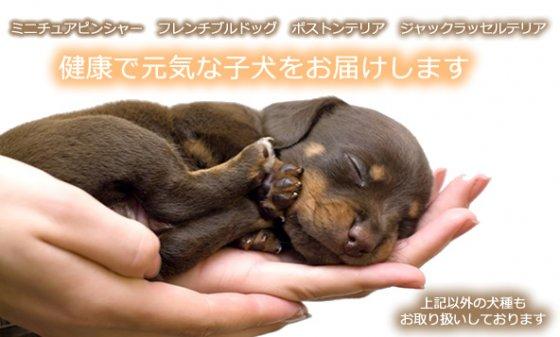 子犬販売ワンズラボ