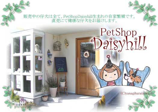 京都のペットDaisyhill